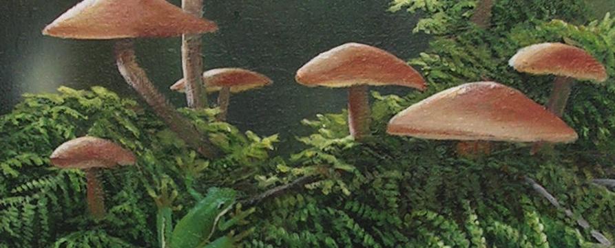 © Lee Lauritzen, Mushrooms and frog